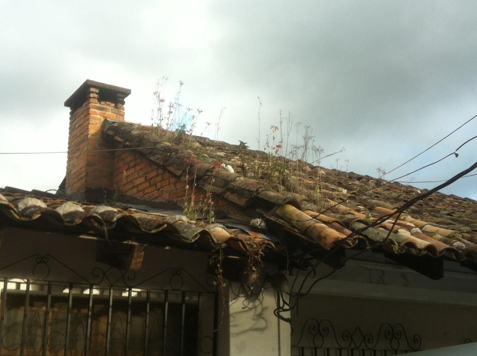 rooftilegarden
